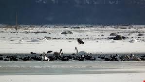 Vintertur til Herslev 19. februar - Havkajak